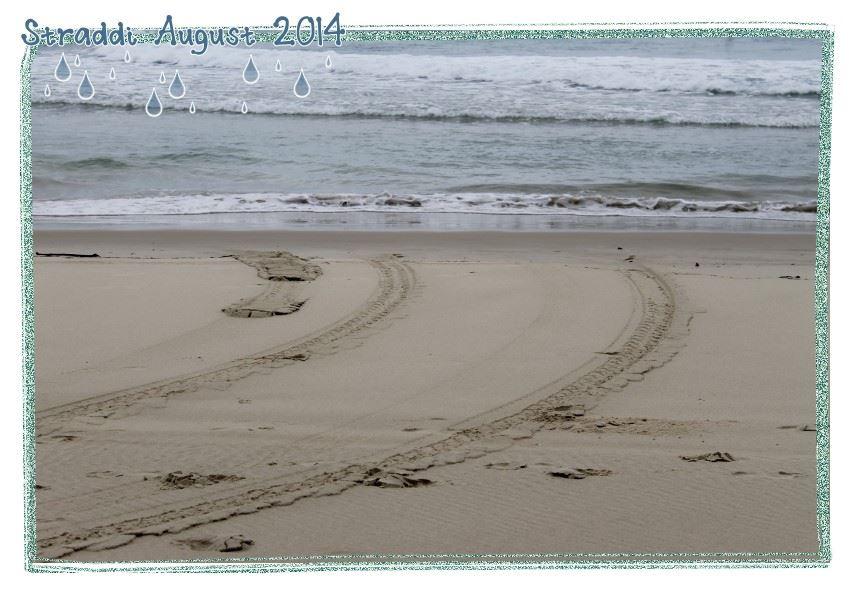 Straddie Aug 2014